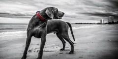 الكلب في المنام لابن سيرين