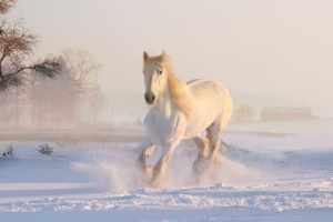 تفسير حلم ركوب الحصان الأبيض