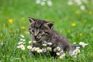 تفسير حلم القطة لابن سيرين