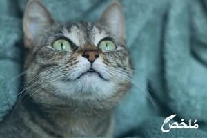تفسير حلم تحول القطه الى انسان