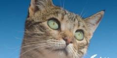 ماكينة حلاقة القطط بدون صوت
