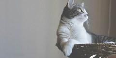 اسهال القطط الرضيعة