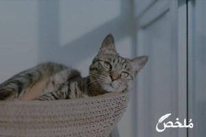 علاج أمراض القطط بالاعشاب