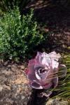 Front_garden_detail_4_