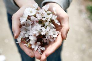 homeopathy mullum herbals
