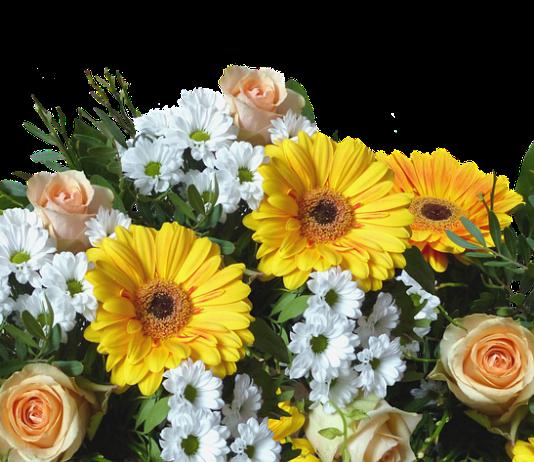 Flores em PNG fundo transparente