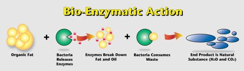 small resolution of bio enzymediagram3