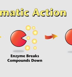 enzymediagram [ 5994 x 2550 Pixel ]