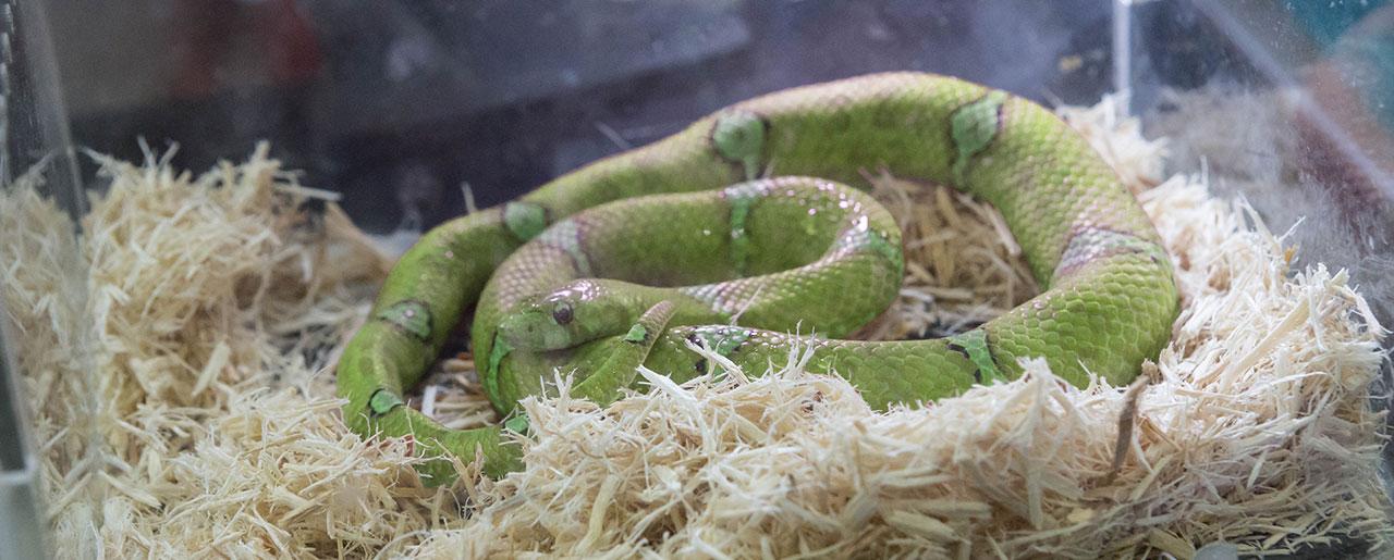 Posséder un serpent ou un reptile : quel impact sur votre assurance habitation?