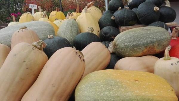 À la rescousse de nos fruits et de nos légumes!