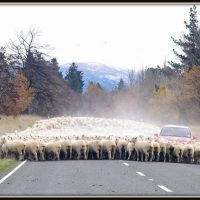 Successful Shepherding Is Done on the Ground, not on the Ivory Tower