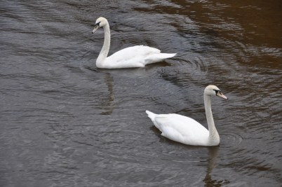 They swam around each other as if performing an ageless, perfectly choreographed ritual.