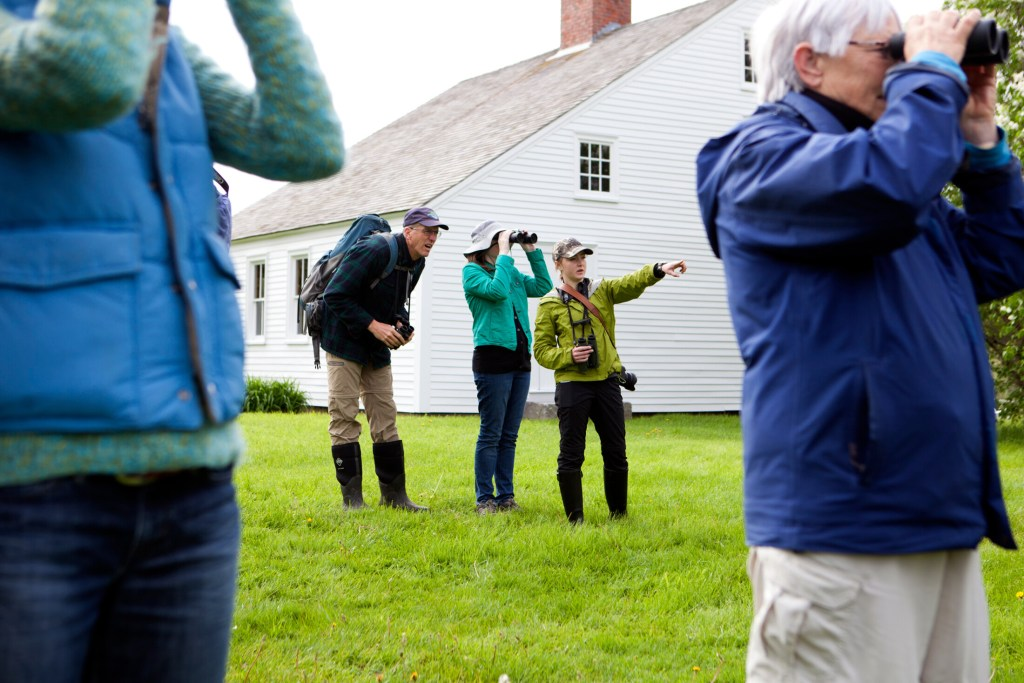 Birders search for migrating species at Pettengill Farm in Freeport for the L.L. Bean-Maine Audubon Birding Festival in 2018. Photo courtesty of Maine Audubon.