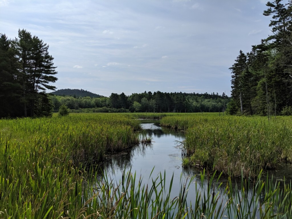 Beaver flowage on Holbrook Island Preserve, with Bakeman Mountain in the background. The preserve is pristine.