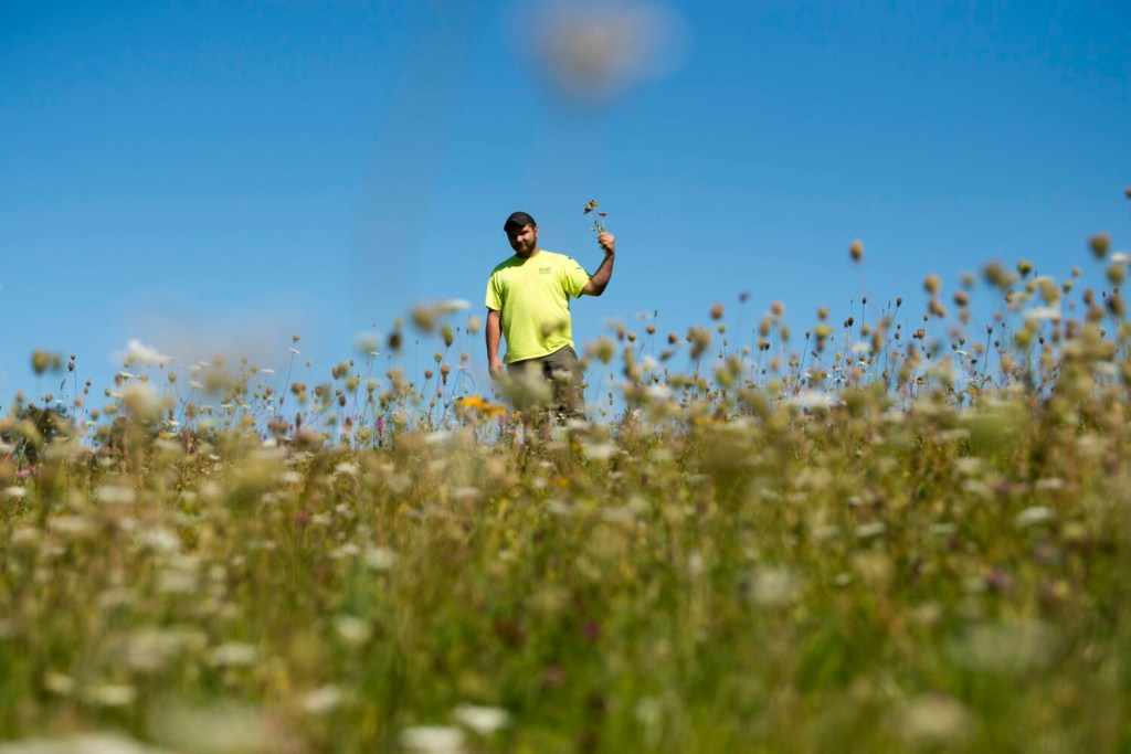 Dylan Clark, the manager of the Oakland transfer station, stands among the flowers of the Monarch butterfly garden at the Oakland transfer station on Wednesday. The town plans to install a solar array on the capped landfill.
