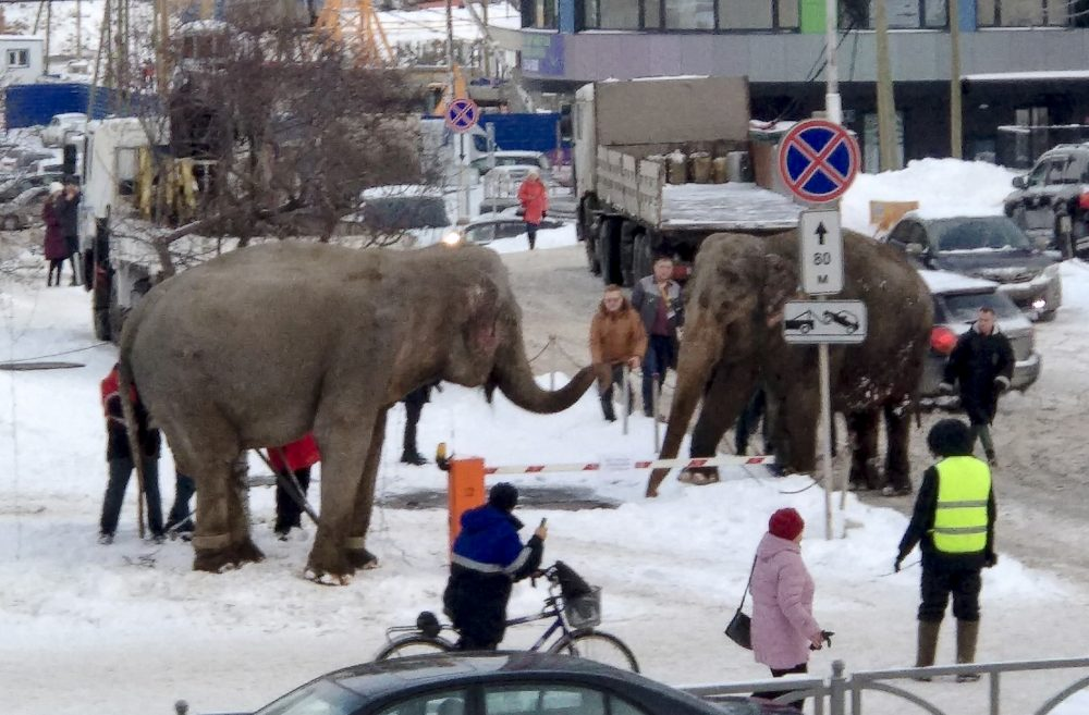In this handout photo provided by Anna Dubrovskaya, in Yekaterinburg, Russia, Thursday.