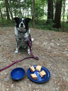 There's usually something one forgets on a camping trip, especially for a quick one-nighter away. On a recent trip, this good man had to make do with a peanut butter sandwich, after his human friend forgot his dog food. He took one for the team without complaint.
