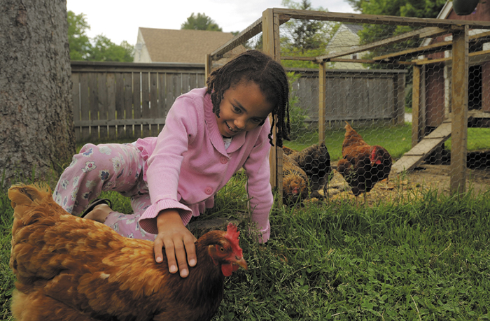 Ruby Jenkins-Henry, 6, plays with her New Hampshire Red chicken, Minerva-Louise, in the yard of her Portland home on Thursday.
