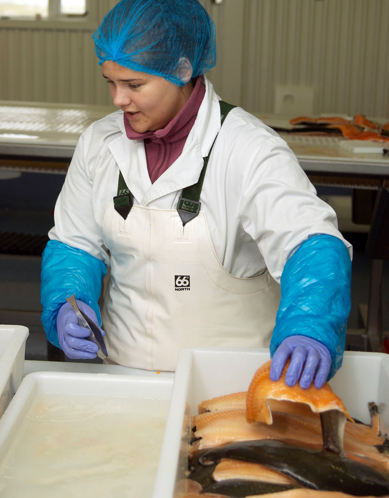 Gudrun Arnadottir, 20, fillets Arctic char at Nattura Arctic Charr, a fish processor in Porlakshofn, a fishing port on the southern coast of Iceland, on Sept. 12.