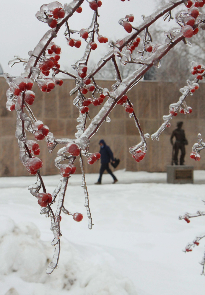 Photo by Jeff Pouland THICK ICE: A thick coating of ice clings to a tree outside the Maine State Library in Augusta during Monday's storm.