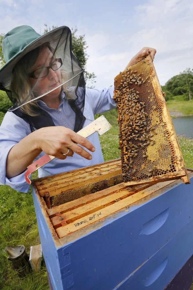 """Erin MacGregor-Forbes, a master beekeeper, checks her hives in Portland. Many plants touted as """"bee-friendly"""" are pretreated with a class of pesticides shown to harm and kill bees and other pollinating insects, according to a study to be released Wednesday at a press conference in Portland."""