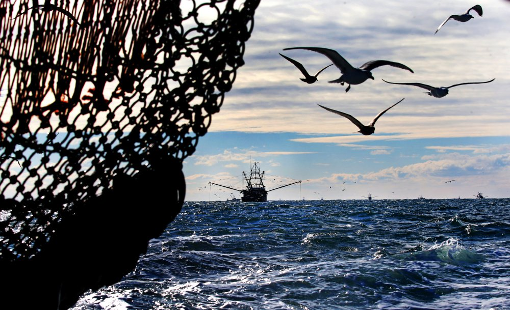 Large fishing boats drag for scallops last week in the Gulf of Maine. Maine's small boat fishermen scrambled in bad weather this season to reach their quota so the scallop grounds would be closed to the larger boats, which have no quotas under federal fishing rules.