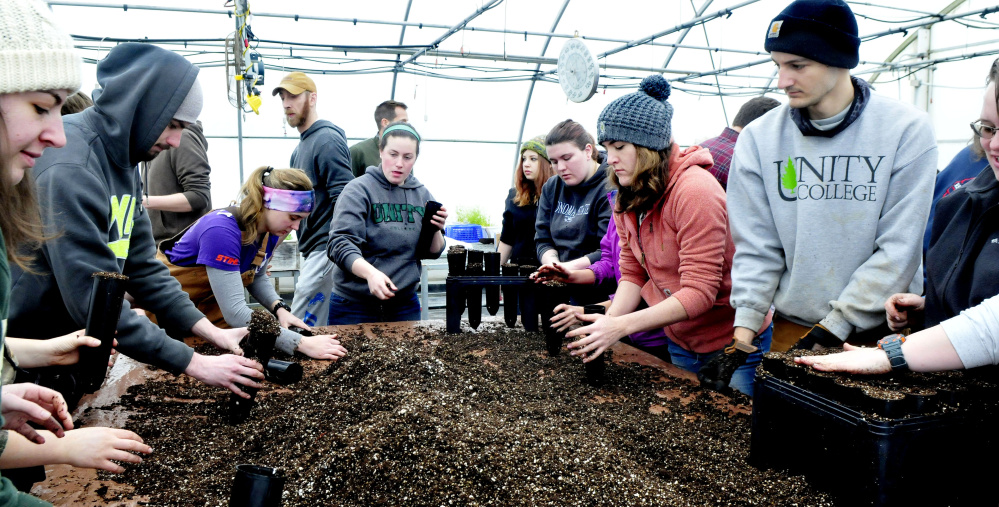 More than 50 Unity College students fill pods with soil Tuesday for the 1,000 American chestnut tree seedlings that will be part of a multi-year effort to develop blight-resistant trees for a restoration of the species at the McKay Farm and Research Station in Thorndike.