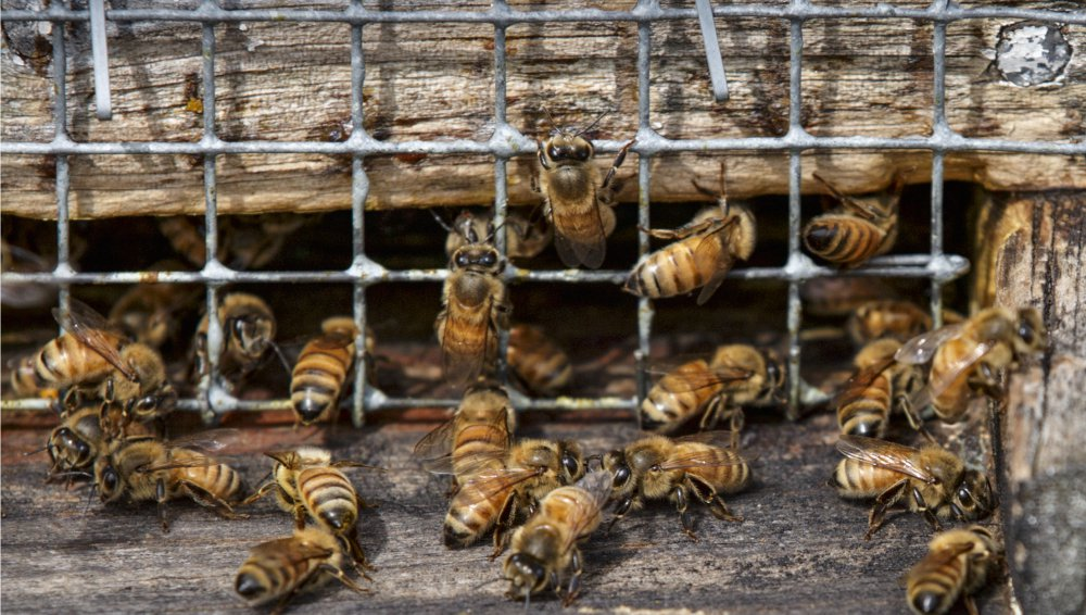 """Associated Press/J. Scott Applewhite Winter losses of honeybees in the U.S. were at the lowest levels in more than a decade with only 21 percent of the colonies dying, a survey of beekeepers reveals. But it has only """"gone from horrible to bad,"""" the survey director warns."""