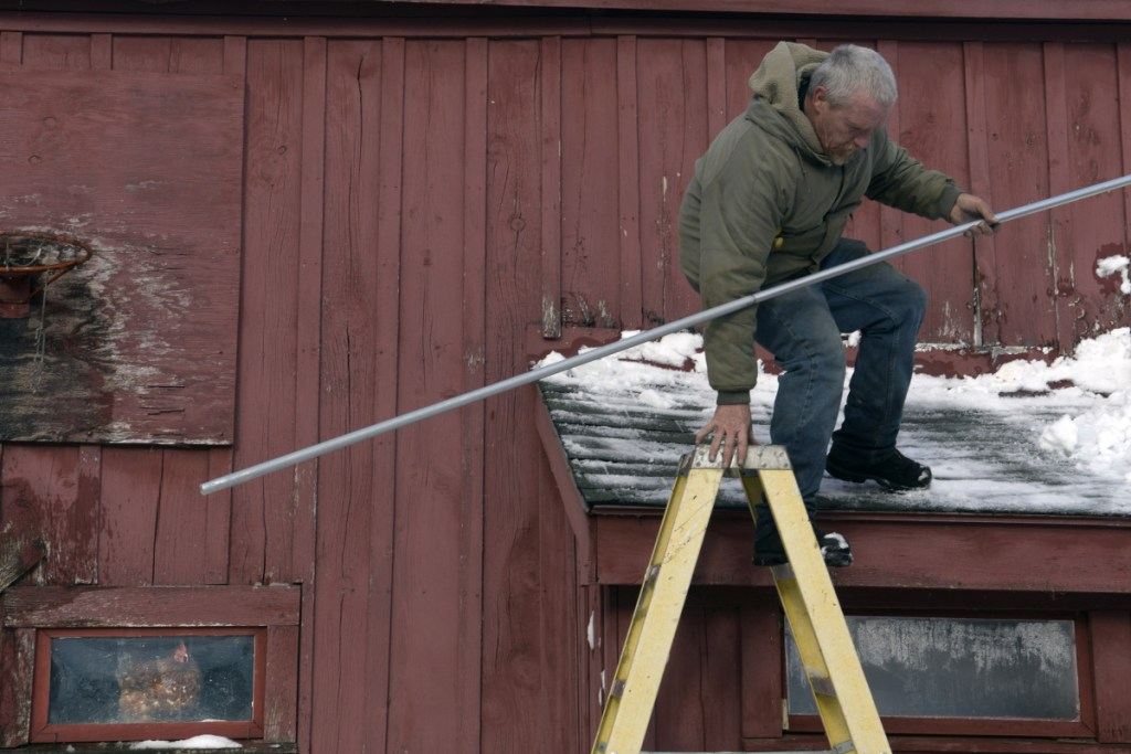 """A hen watches farmhand Wayne McAfee descend a barn roof Tuesday after cleaning snow off it at Sonny Black's farm in Litchfield. Black said he gets 20 eggs a day from a flock of 28 chickens. """"But keeping their water from freezing is challenging,"""" Black said of the coldest winter he recalls."""