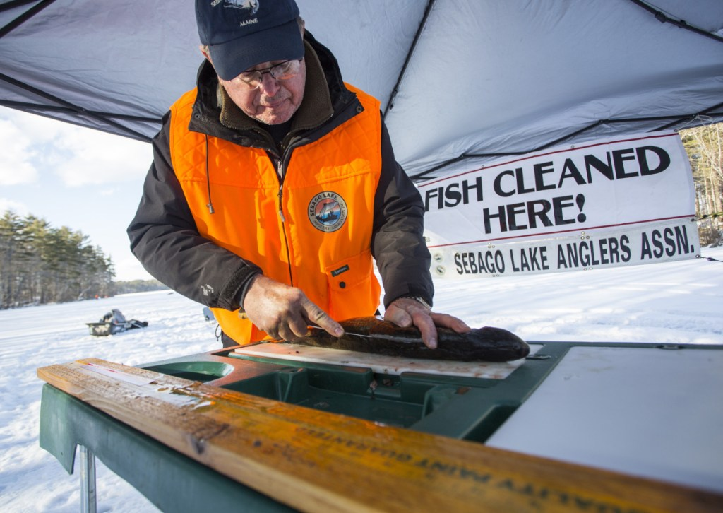 Bob Chapin, who lives on Thompson Pond near Sebago Lake, cleans a 20-inch pickerel. He's cleaned fish at derbies in southern Maine for 10 years.