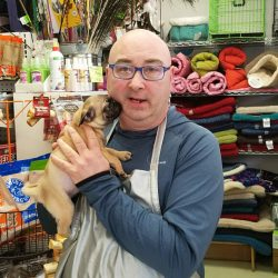 Maine bill would ban puppy and kitten sales at pet stores
