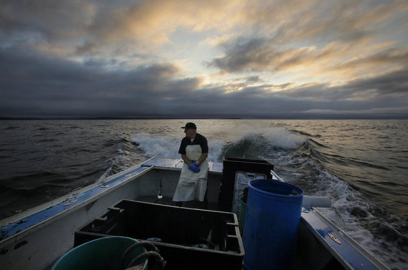 So you want to be a lobsterman - Portland Press Herald