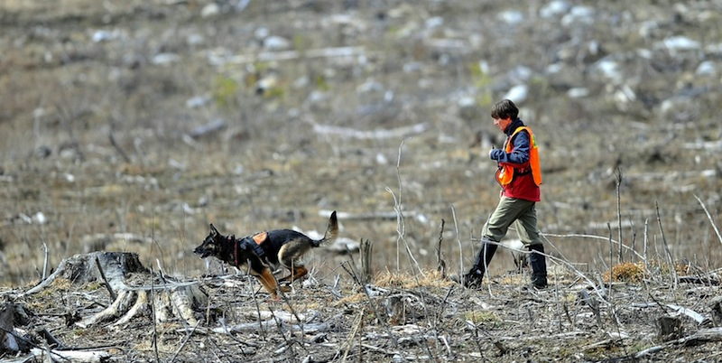 Members of the Maine Search and Rescue Dogs search an area next to Heath Court in Oakland for missing toddler Ayla Reynolds on Saturday, March 24, 2012 for Ayla Reynolds. Authorities have renewed the search for Reynolds in spots that were previously covered in snow.