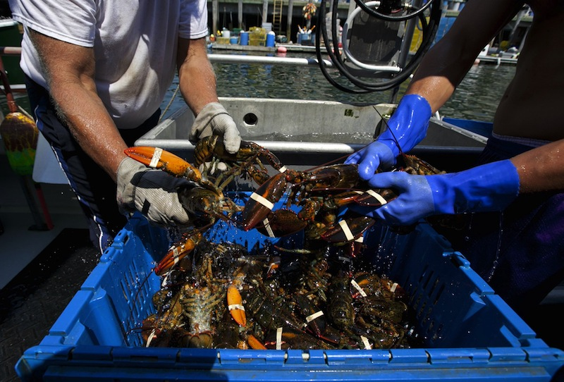 Lobsters are unloaded from a fishing boat in Portland in this August 2012 photo. Efforts to market and brand Maine lobster have gained momentum in the wake of last year's glut, when supply exceeded demand and resulted in the lowest per-pound prices in more than 20 years.