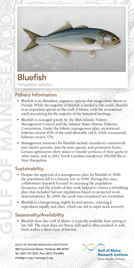 "The restaurants also get ""species cards"" like the bluefish card pictured. Species cards will be given to customers to show what a particular fish looks like and explain how it is faring and how it is managed."