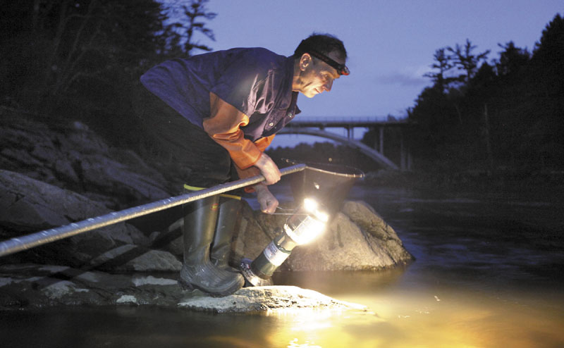 Bruce Steeves uses a lantern while dip netting for elvers on a river in southern Maine in 2012.