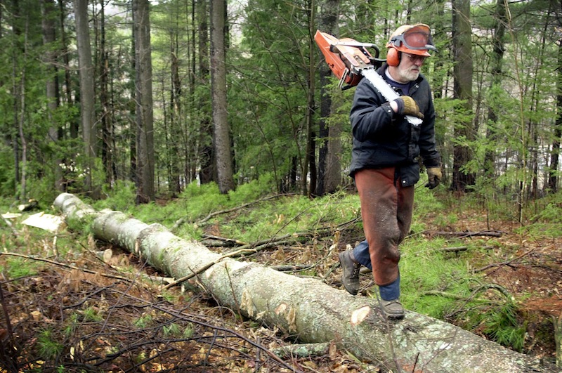 "In this 2004 file photo, a logger from Jay, Maine, moves on after felling and de-limbing a white pine in East Dixfield, Maine. Gov. LePage blasted a state senator's roots in northern Maine and the logging industry on Thursday, June 20, 2013. ""People like Troy Jackson, they ought to go back in the woods and cut trees and let someone with a brain come down here and do some work,"" LePage said."