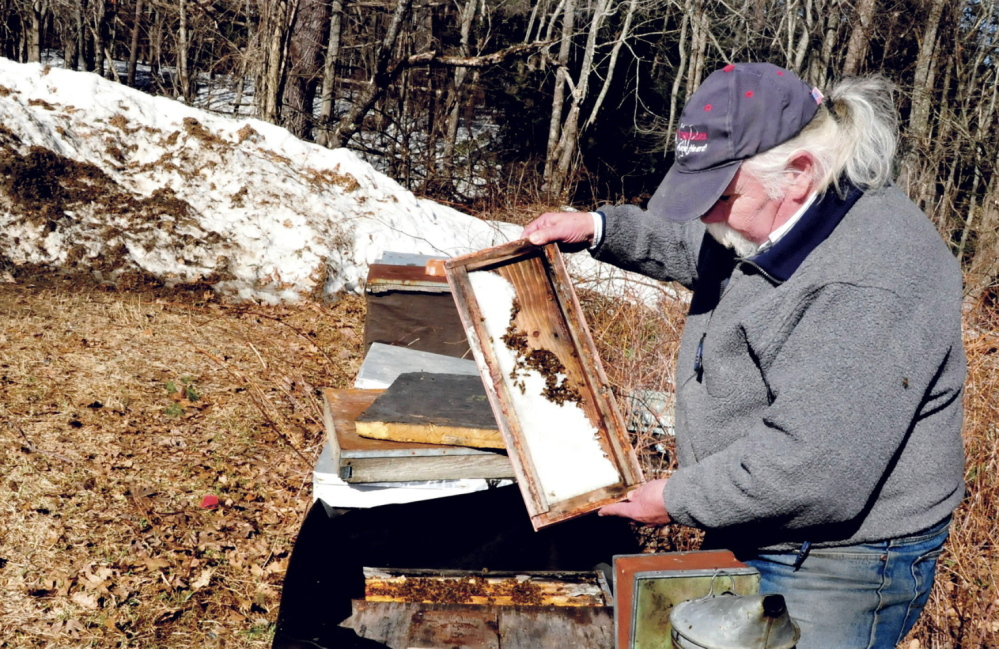 Apiarist Bob Egan of Skowhegan examines honeybees in hives beside piles of snow in Benton on April 10. Egan said his bees' natural food sources are at least two weeks behind schedule because of the cold, and he has resorted to feeding them with a pollen supplement to try to keep them alive.