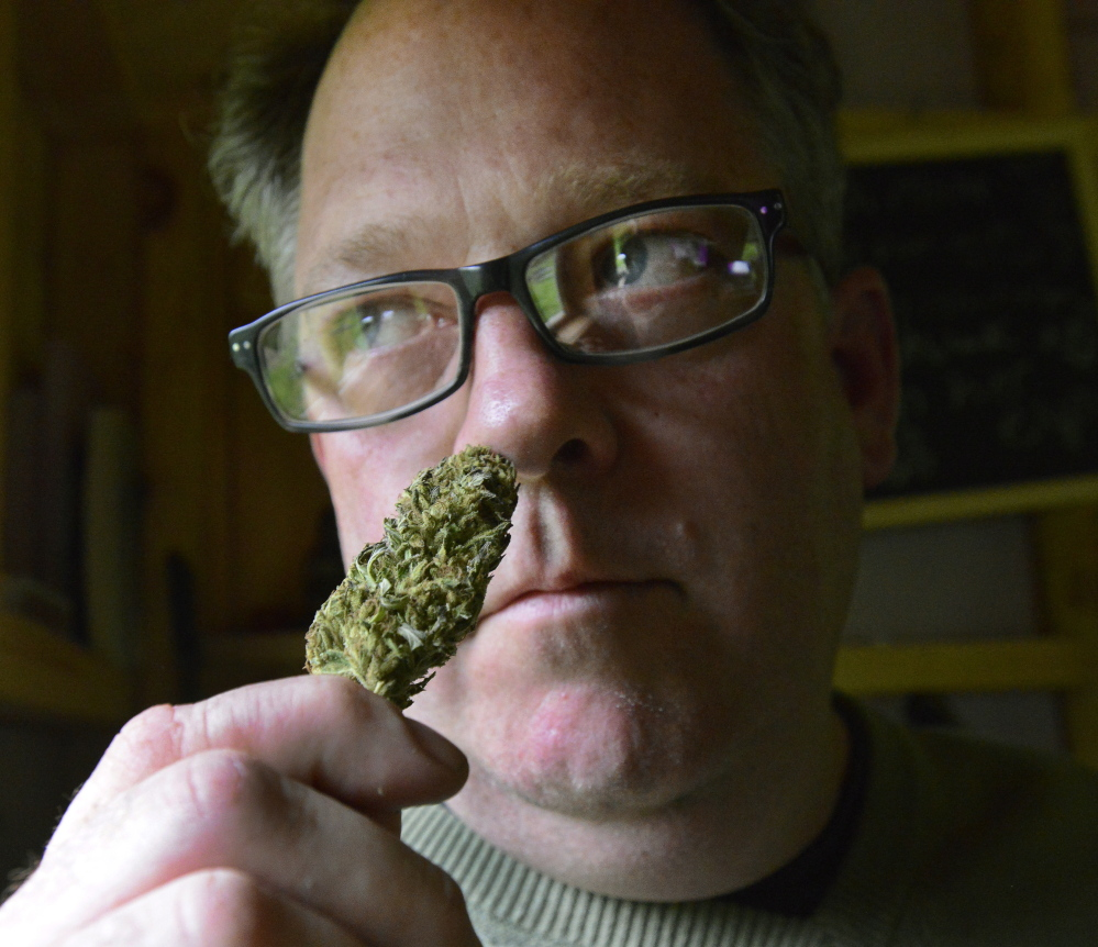"Crash Barry with a marijuana bud at his home in Oxford County. Barry is doing speaking engagements and signings around the state – and occasionally lighting up – to support his book, ""Marijuana Valley.""  John Patriquin/Staff Photographer"