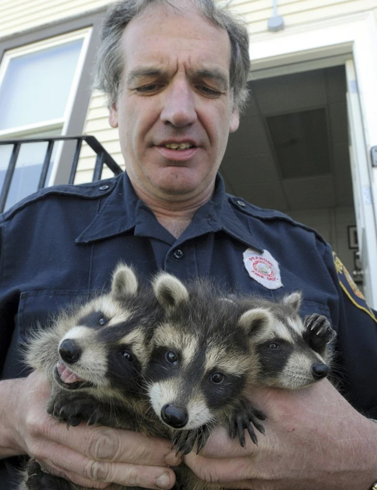 Peabody firefighter's a best friend for wildlife in need