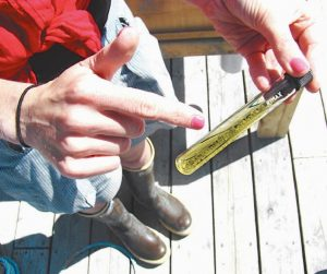 ABOVE: A tube with hatchery spat, or juvenile clams, shows the size the soft-shell clams are before they are put in the upweller. The clams have shown rapid growth in the upweller, which provides a nutrient-rich habitat safe from predation, said Sara Randall.
