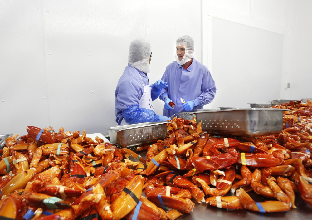 Luke Holden, right, processes cooked Maine lobsters at his Cape Seafood in Saco. He also owns 13 Luke's Lobster restaurants, with locations in New York, Washington, D.C., and Philadelphia.