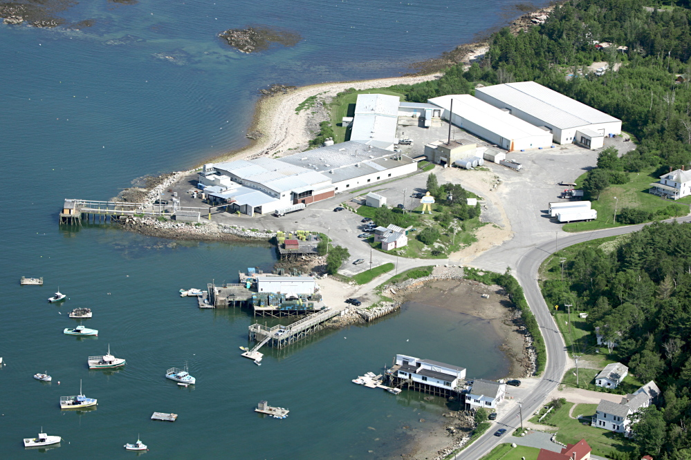 Lobster processing plants like Maine Fair Trade Lobster, which opened in Prospect Harbor last year, have sprung up around the state over the past few years. More than 700 people work in lobster plants at the peak of the harvest.