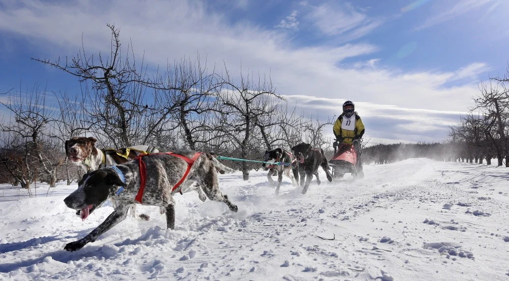 Jessica Johnson of Bristol and her dog team traverse a flat section during the four-dog sled race at the Down East Mushers Bowl in Bridgton on Saturday.
