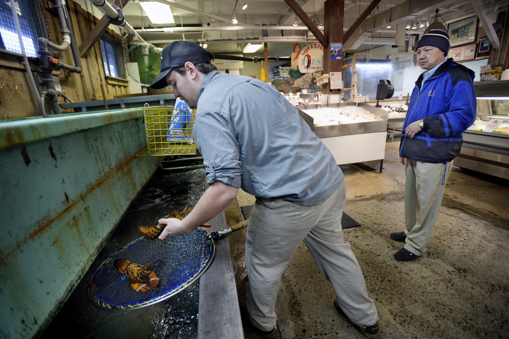 Abraham Turcotte of Harbor Fish Market in Portland gets lobsters for Phillip Yang of Cranston, R.I., on Thursday. The ocean researchers' forecasts may help the lobster industry prepare for the kinds of conditions that led to a market glut in 2012, when unusually high ocean temperatures prompted the migration of lobsters toward shore weeks earlier than normal.