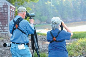 THERE ARE PLENTY OF OPPORTUNITIES to go birdwatching in the Mid-coast region, including an event slated for this Saturday at KELT's Sewall Woods Preserve in Bath.