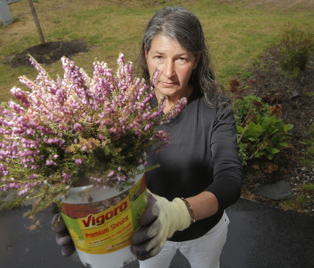 Pam Jones of Kennebunk holds a heather plant that she bought at Home Depot in Biddeford. The label didn't list any pesticides, so she thought she was buying a pesticide-free plant.