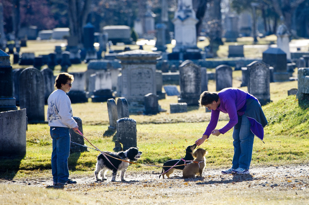 Andrea Viennau and Kelly Anderson of Falmouth enjoy a warm Saturday afternoon, with their dogs in Evergreen Cemetery. Some residents are concerned about parking congestion on Stevens Avenue, the main street next to the cemetery. Gabe Souza/Staff Photographer