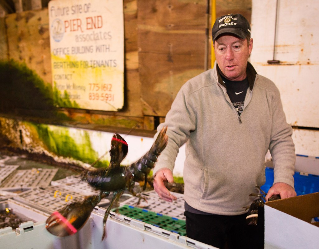 New Meadows Lobster Company floor manager Larri Delponte sorts lobsters at its Portland lobster pound Friday.