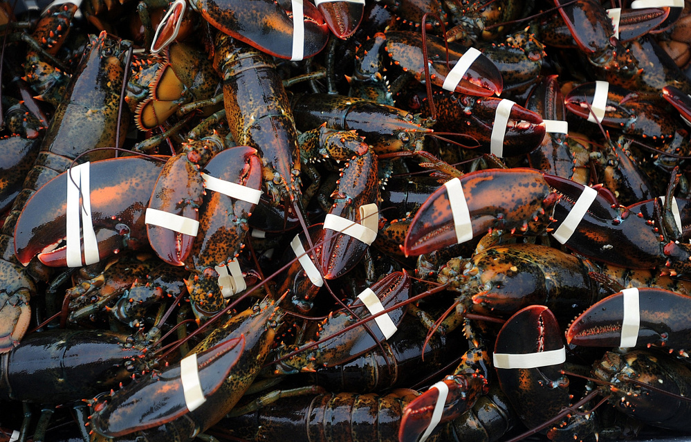 Scientists say 32 American lobsters have been found in Swedish waters in the past eight years, posing a risk of disease and health problems for native European lobsters.